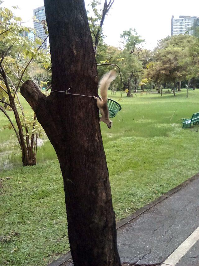 bangkok thailande parc morchit nature ecureuil