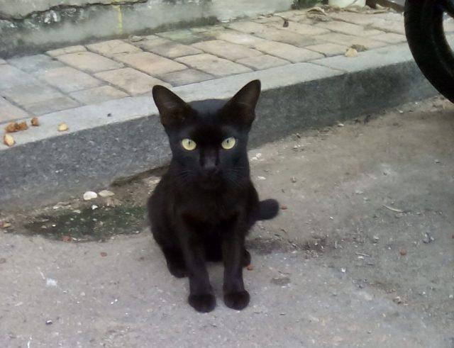 chat noir malaisie melaka