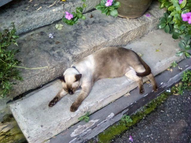 chat qui dort malaisie melaka
