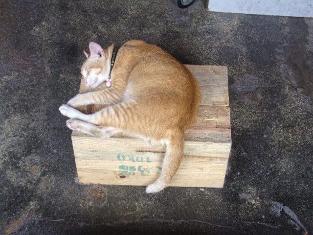 chat sur une caisse en bois malaisie georgetown