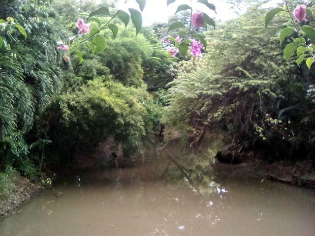 parc bangkok morchit nature thailande