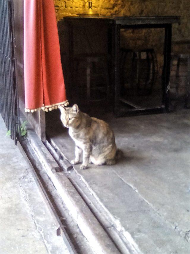 petit chat melaka malaisie
