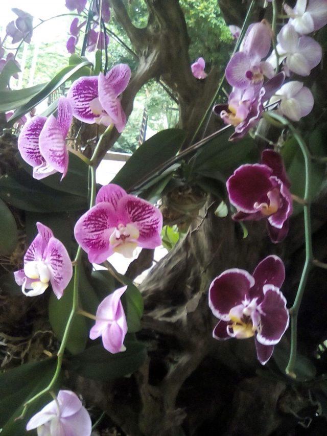 orchidee nature malaisie voyage decouverte