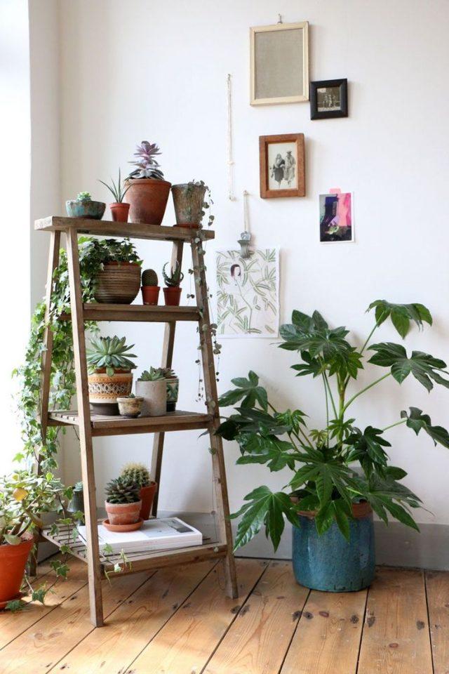 plante verte mobilier salon etagere