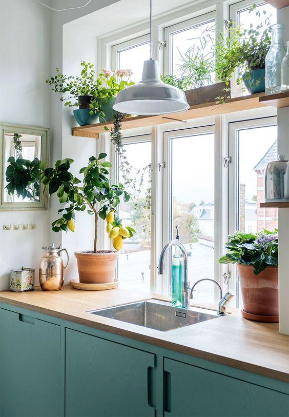 cuisine deco plante fenetre
