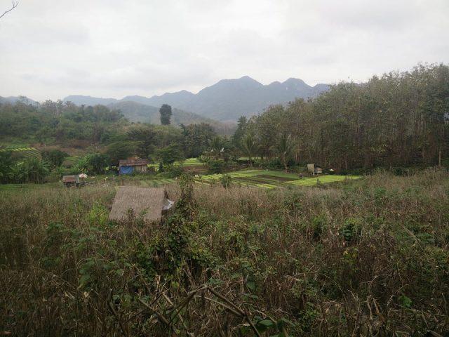 rizieres montagnes laos paysage