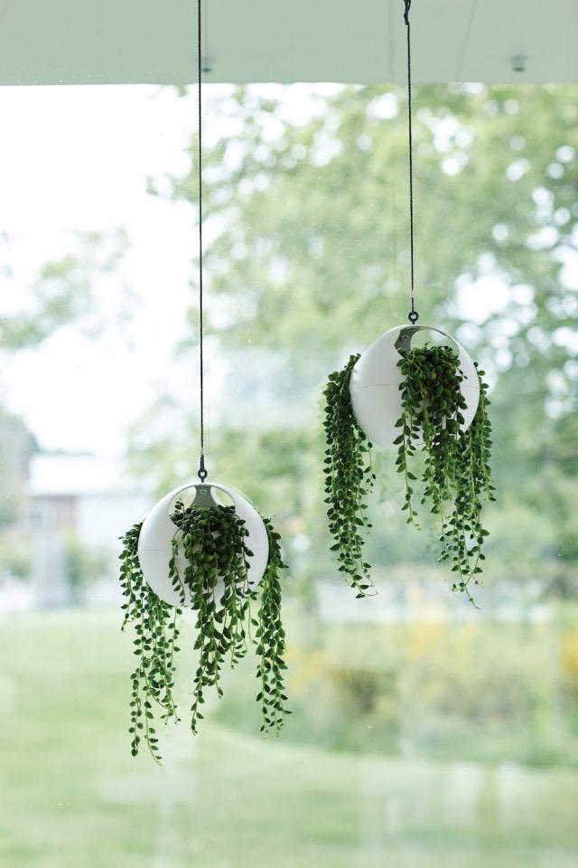 suspension deco plante blanche
