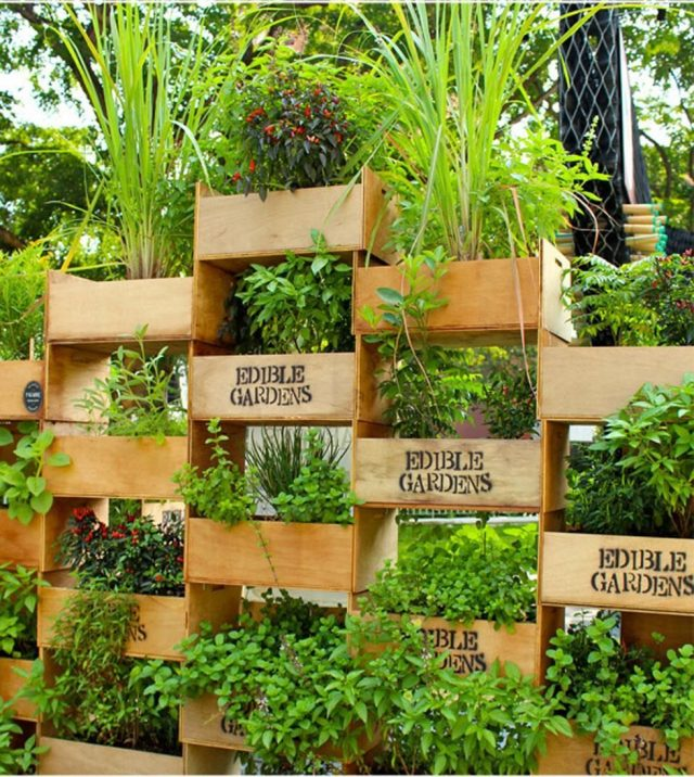 diy jardin facile cagette plantes