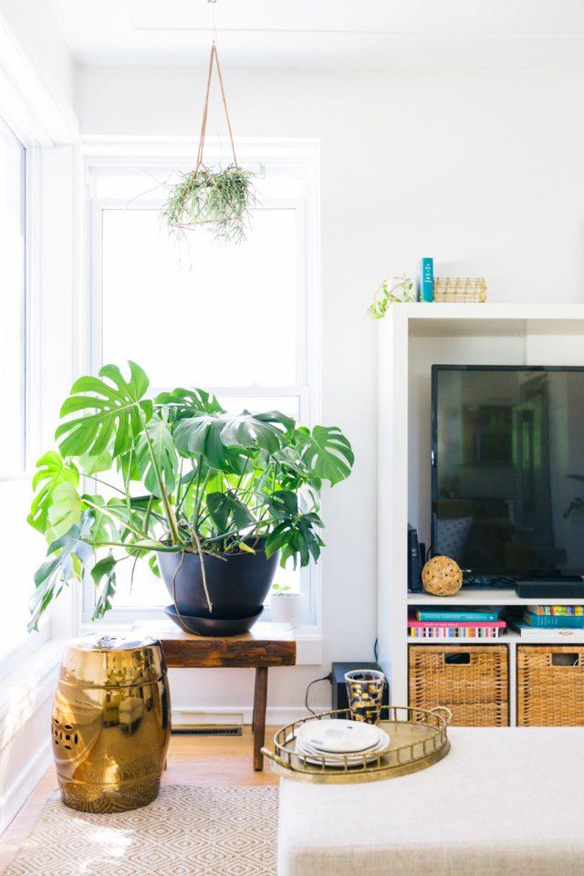 detail deco salon urban nature plantes