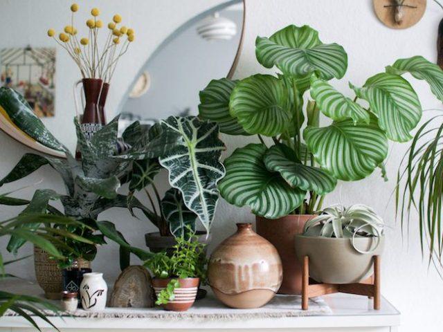 inspiration idee decoration salon urban jungle