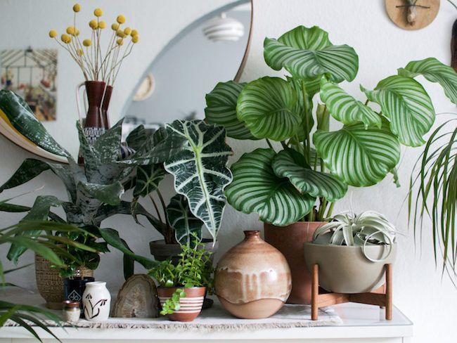 inspiration idee decoration salon urban jungle