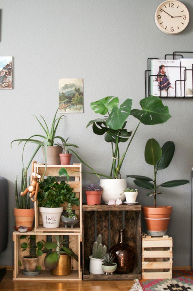 salon deco urban nature cagette plante