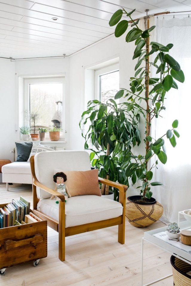 salon urban nature plante fenetre