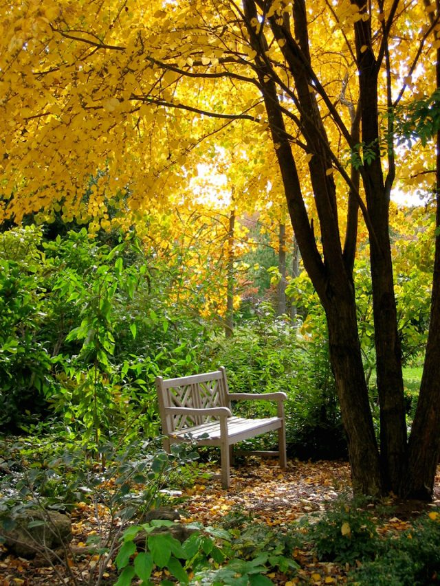 how to prepare your garden in autumn