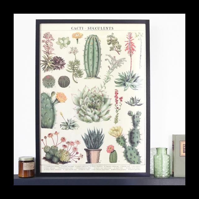 affiche deco cactus succulente motifs