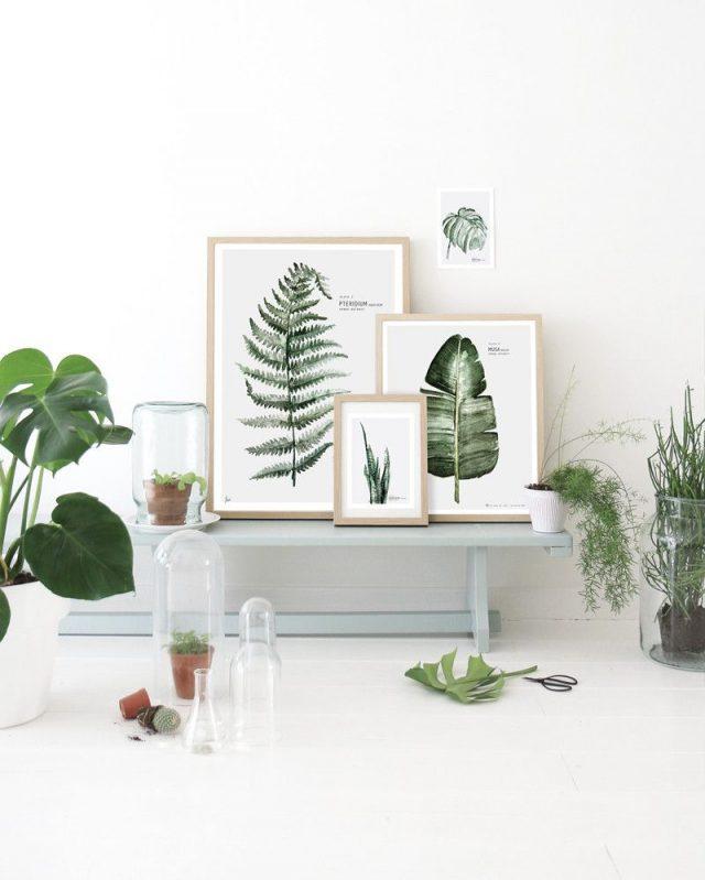 affiche deco plantes tropicales