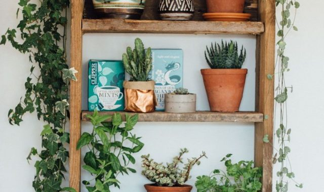 cuisine etagere deco plante urban jungle