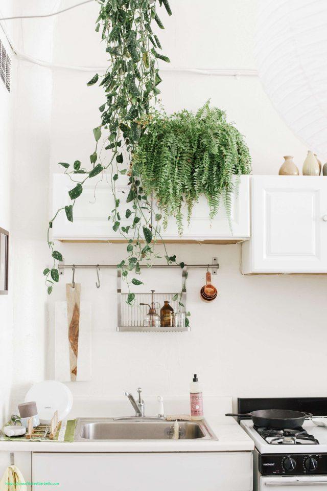 cuisine plante dessus meuble decoration