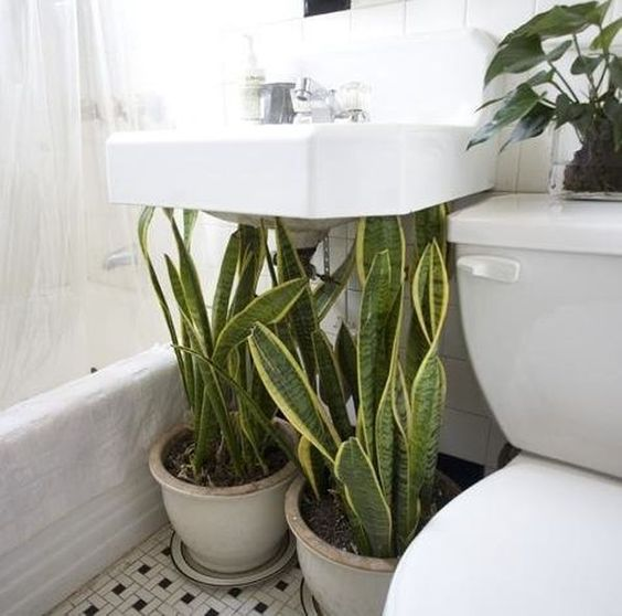 idee plantes salle de bain