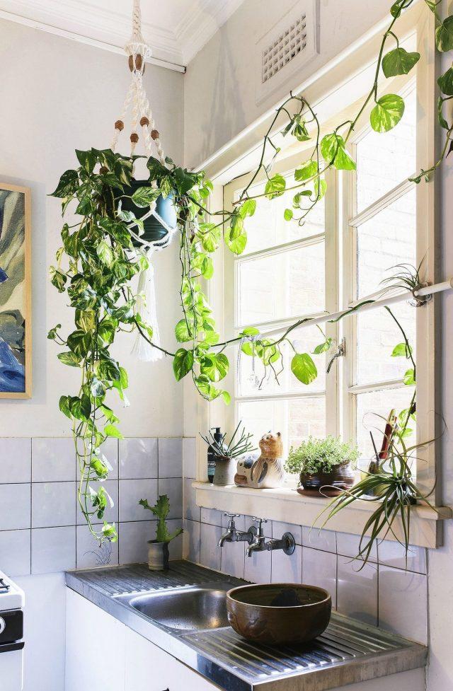 plante suspendue decoration cuisine ambiance
