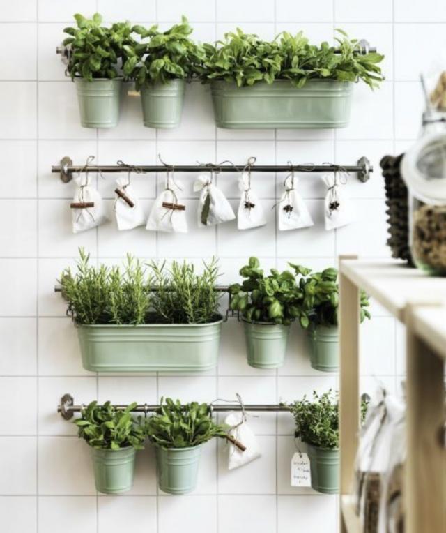 plantes deco cuisine aromatique