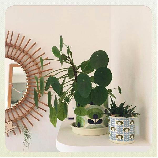ambiance urban jungle petite plante verte