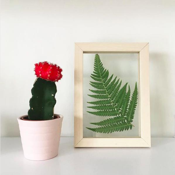 cactus fleur urban jungle deco