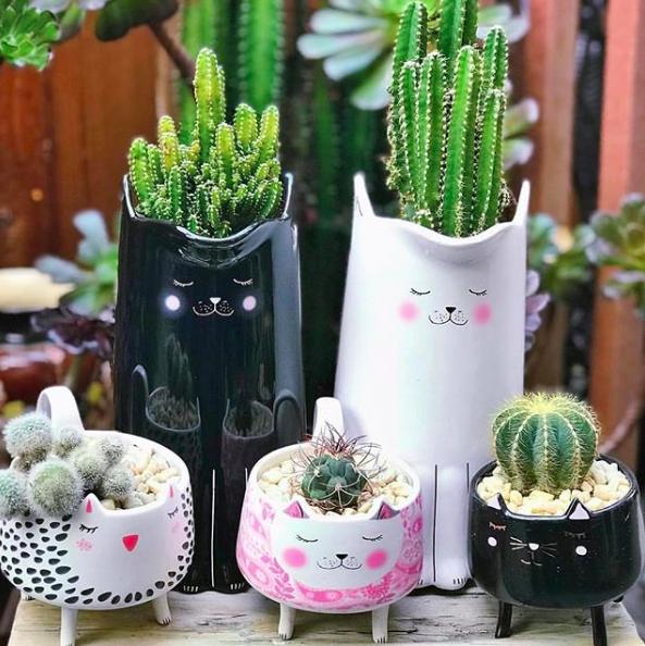 deco exotique pot de fleurs chats