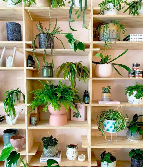 deco plante etagere bois urban jungle