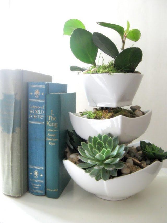 idee deco petite plante exotique succulente