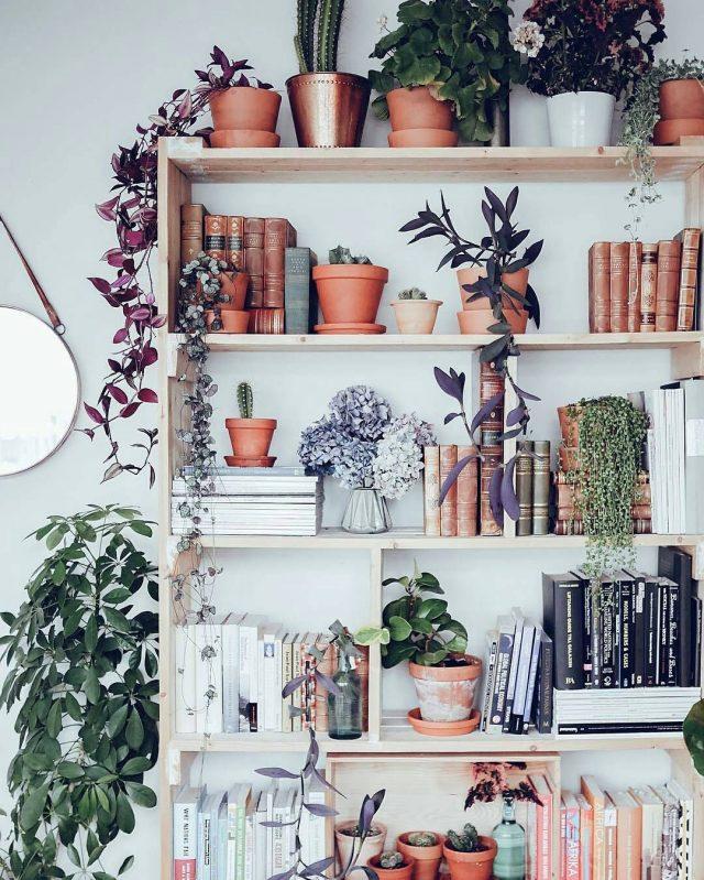 misere plante deco couleur exotique