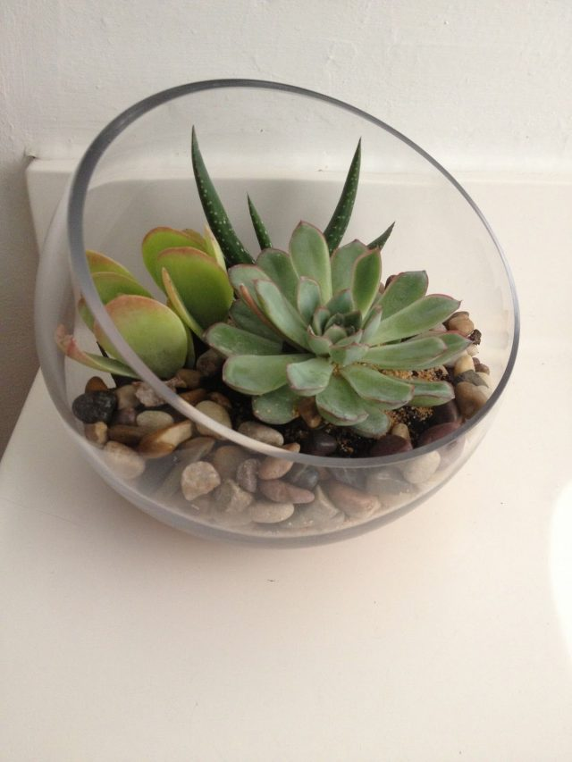 petite plante decoration jungle succulente