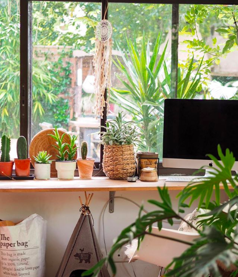petite plantes deco bureau urban jungle