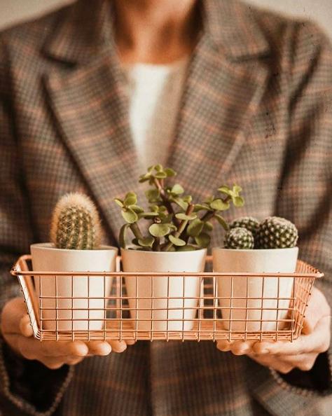 petits cactus et succulentes decoration interieur
