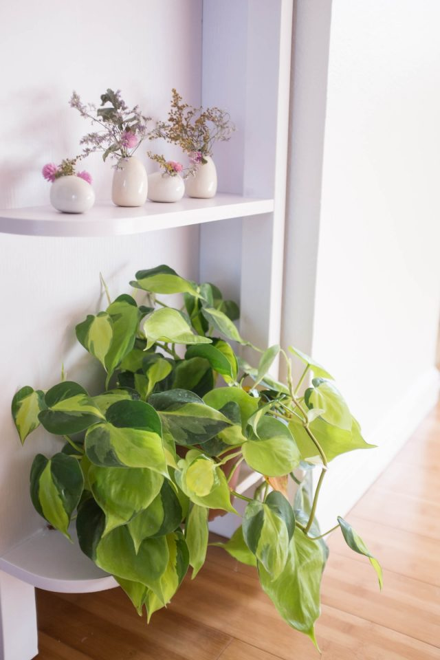 philodendron deco urban jungle
