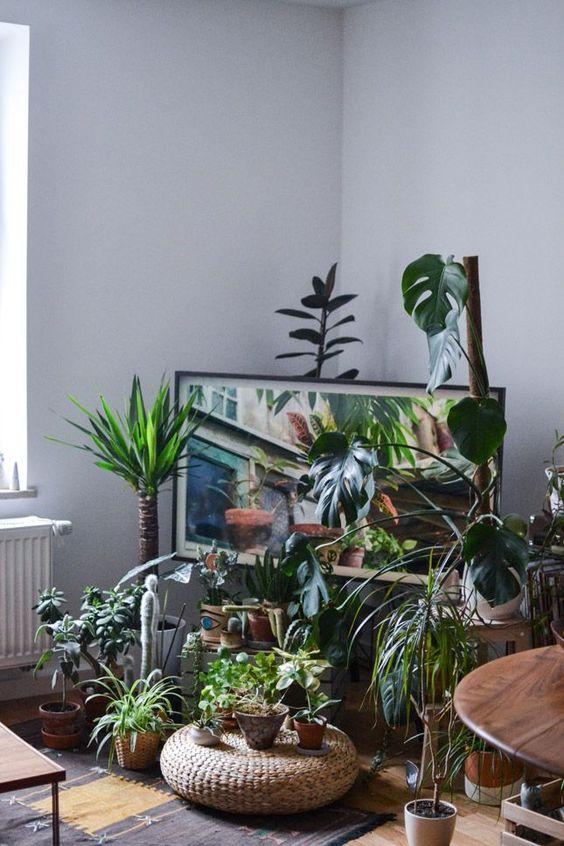 deco salon pouf plantes vertes