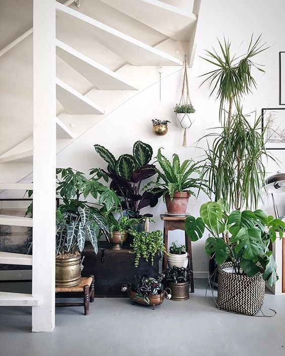 deco sous escalier grace aux plantes decoration en volume