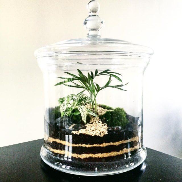 idee cadeau noel terrarium made in france
