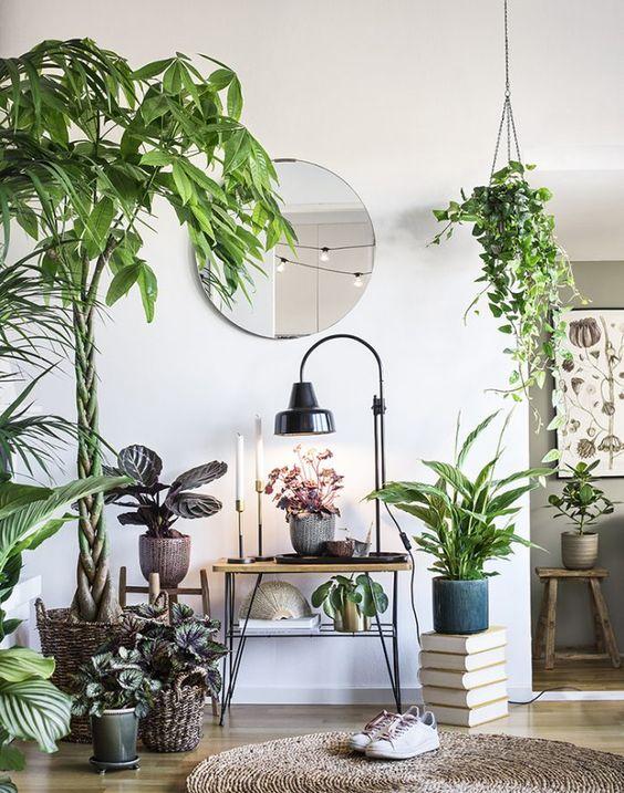 mettre en valeur les plantes exotiques livres