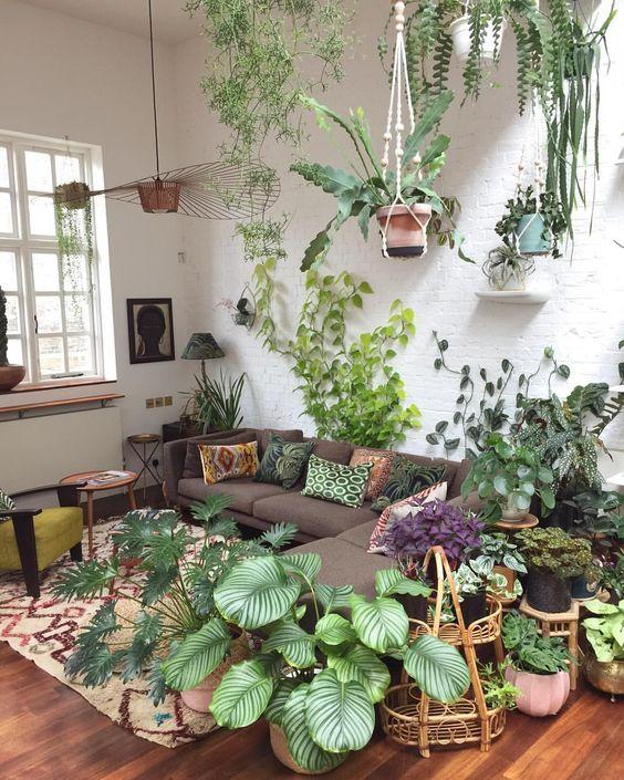 mettre plante exotique en valeur