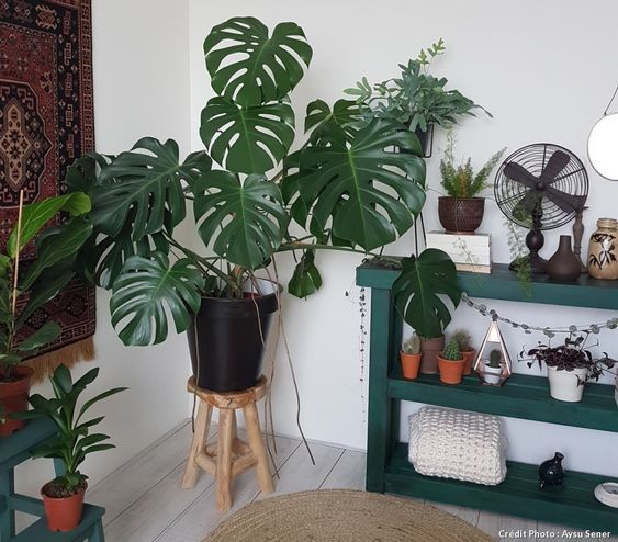 tabouret deco et monstera