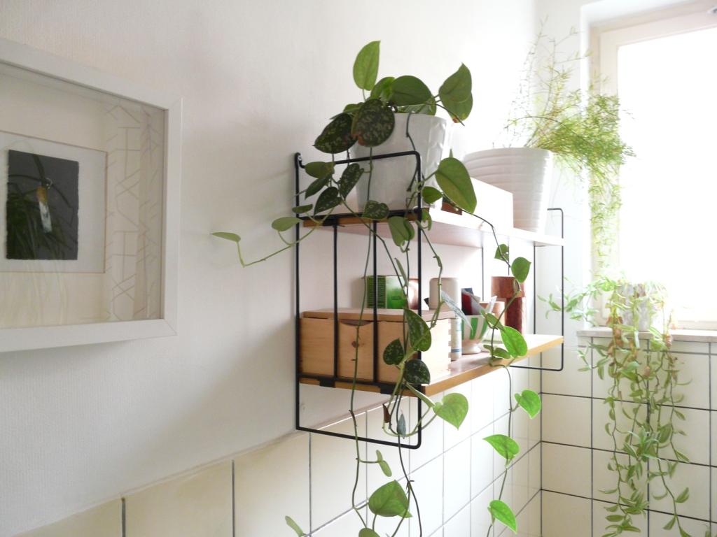bienfaits plantes vertes deco salle de bain