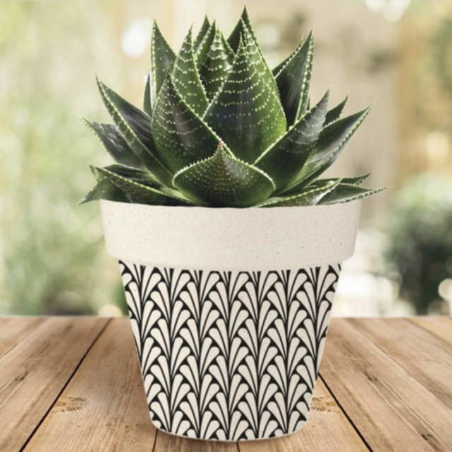 cache pot plante verte bureau decoration 15