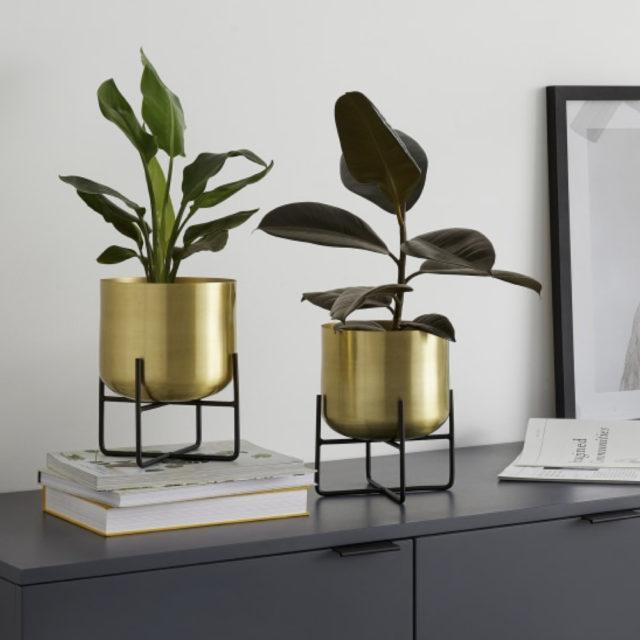 cache pot plante verte bureau decoration 3