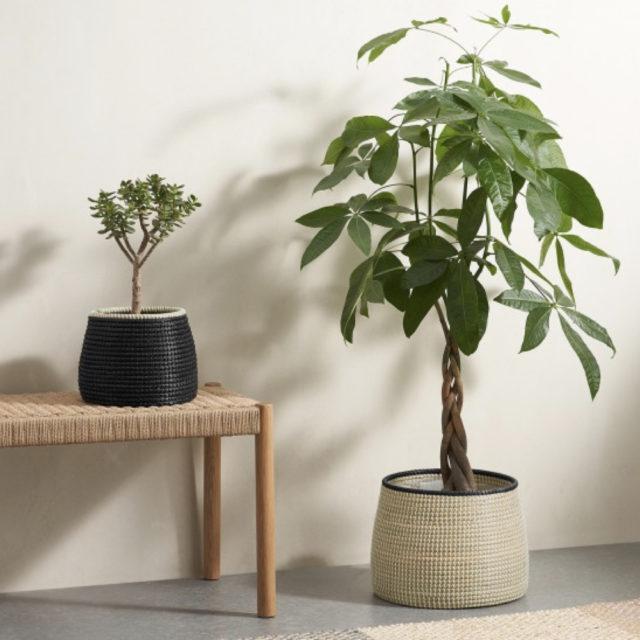 cache pot plante verte bureau decoration 5