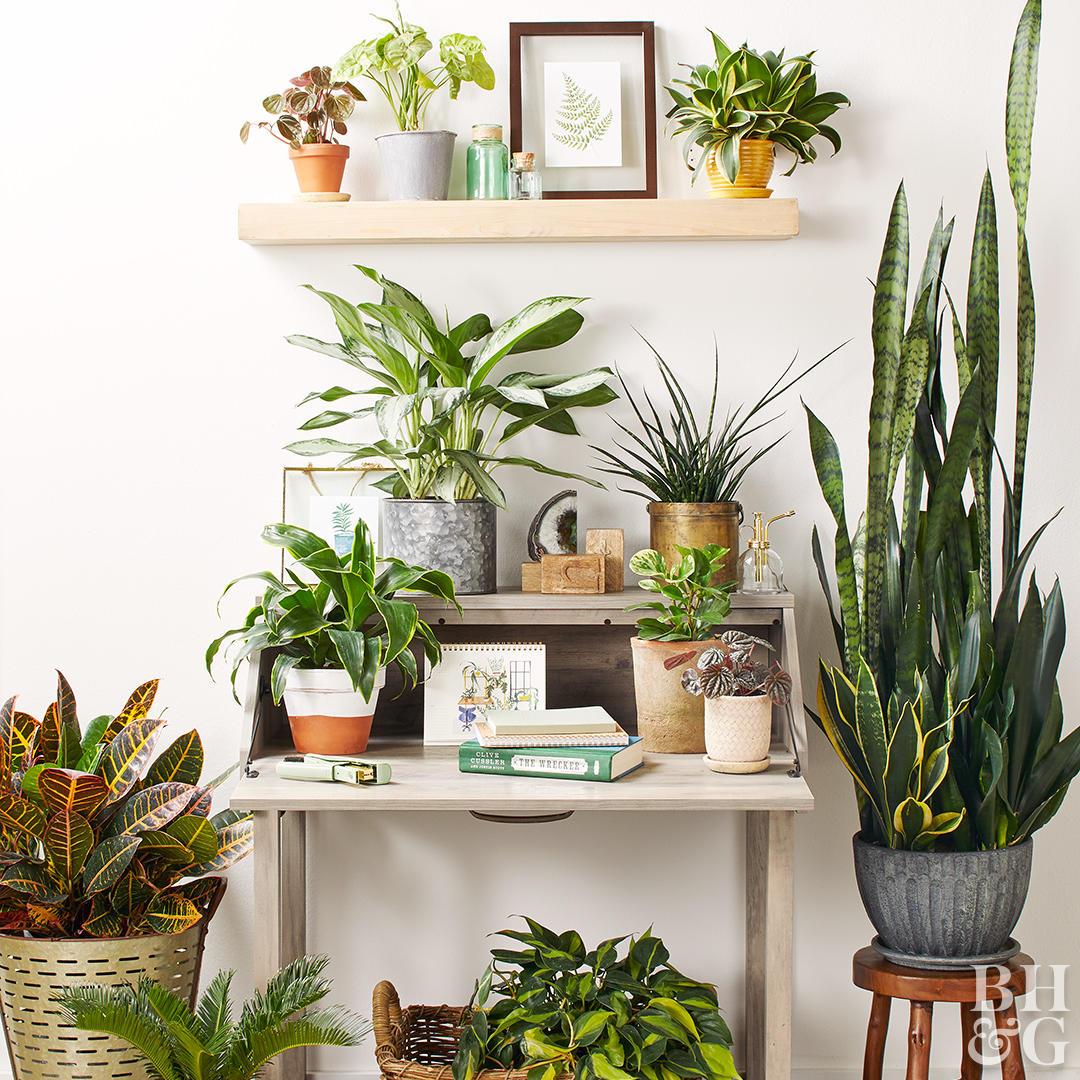 decorer et purifier lair de la maison avec les plantes
