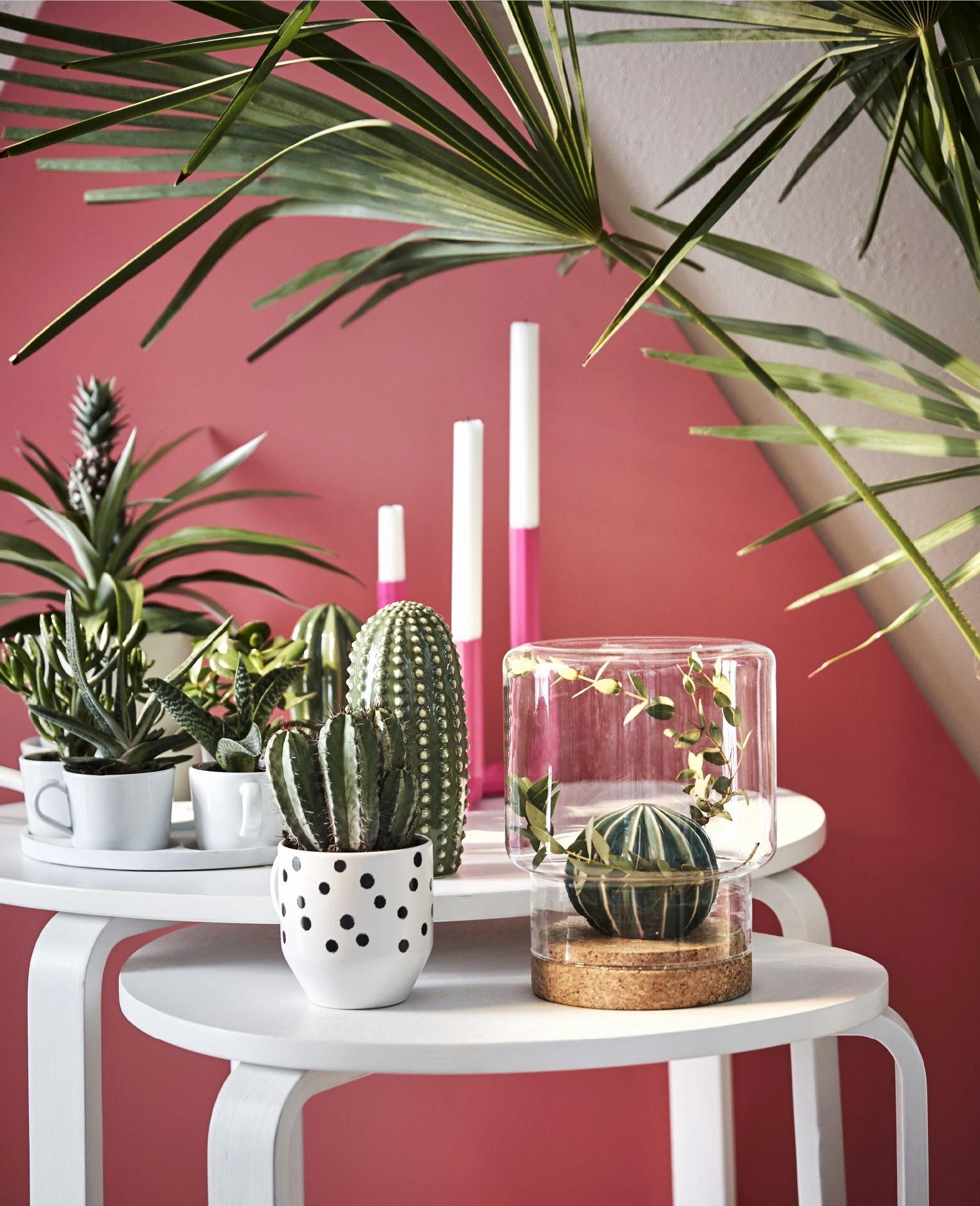 peinture rose et cactus