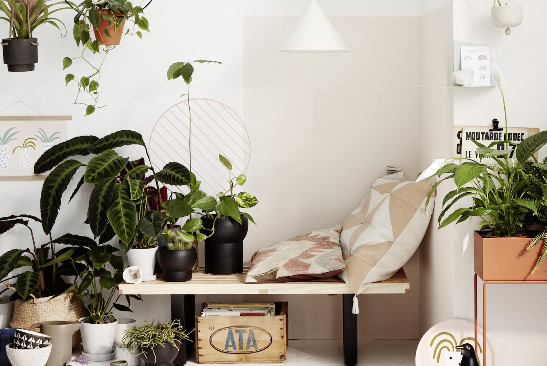 quelles plantes vertes choisir bonne maison