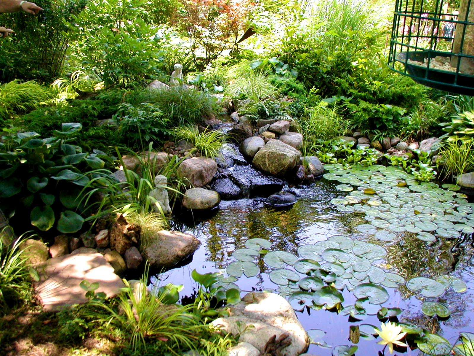 grand bassin decoration jardin plante aquatique