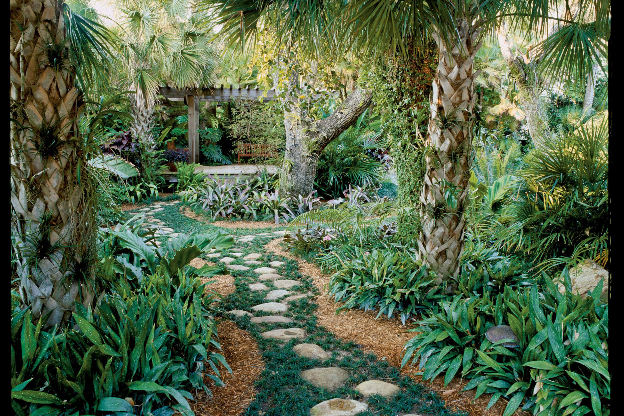 jardin exotique plante vegetation